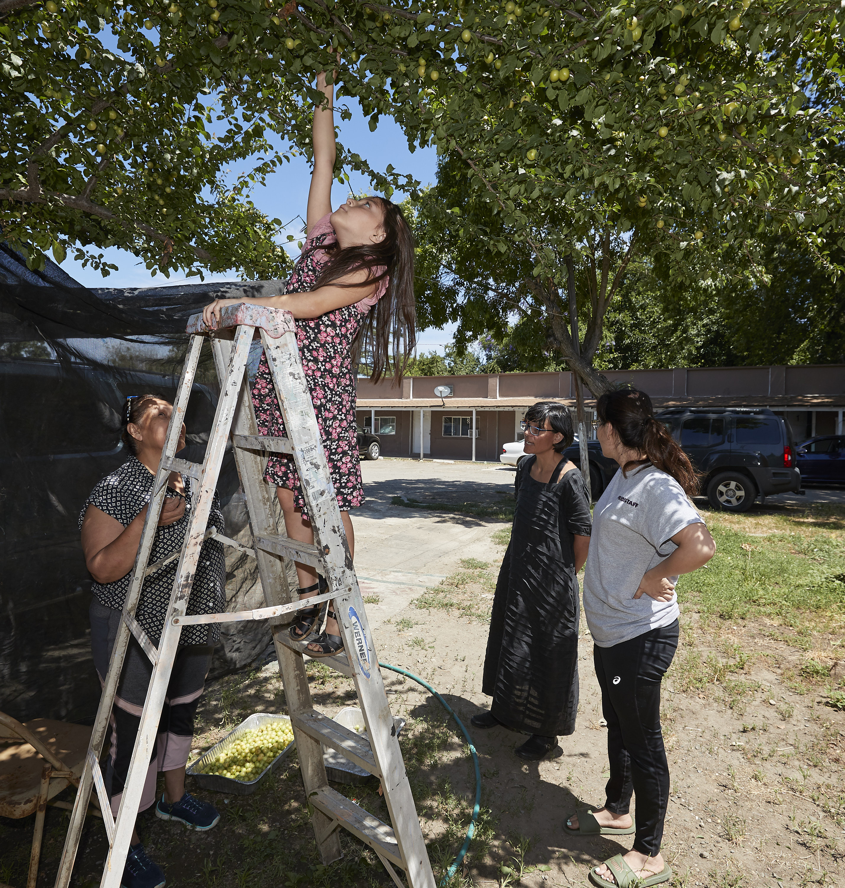 girl standing on ladder to pick fruit while three other woman watches her